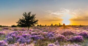 Weekendje weg in Nederland als mindervalide